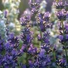 Trauerfloristik Lavendel - Oerding Bestattungen Zeven Gnarrenburg Heeslingen